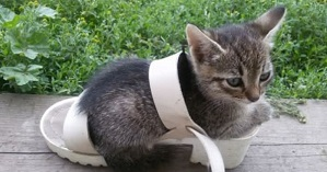 Funny Pictures Of Cats In The Shoe--Cats Jokes| Funny Pictures
