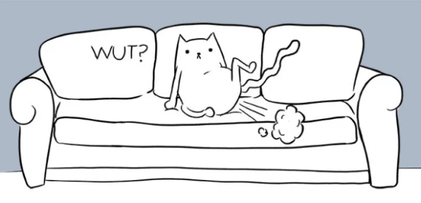 16 Hilarious Cat Stories That Prove Cats Are The Weirdest